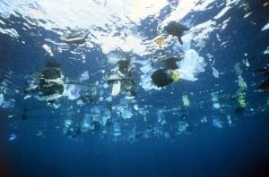 Plastic garbage is swimming on the water surface
